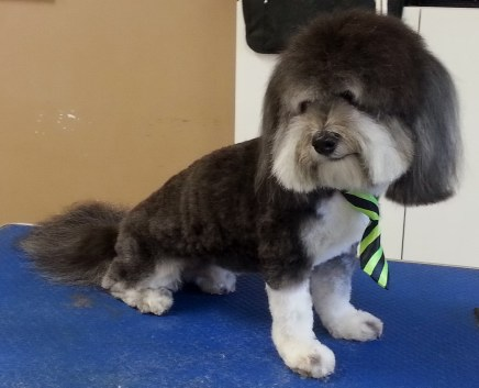 Mobile Dog Grooming Barrie